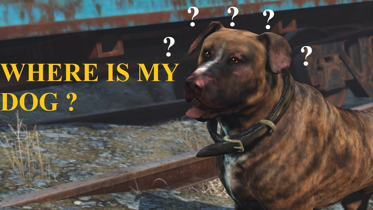 Fallout  How To Get A Dog