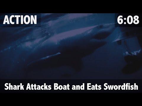 Mako Shark Attacks Boat And Eats 700lb Swordfish