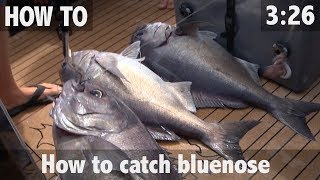 HOW TO CATCH BLUENOSE