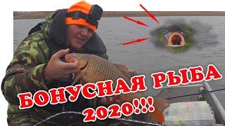 На Дону Сазан Вытесняет Судака Рыбалка 2020 Vovabeer