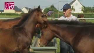 Rencontre avec Jean-Luc Couétil, dans son élevage au Haras de Brem (Manche )