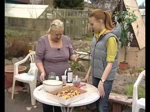 Подготовка луковиц гладиолусов к посадке