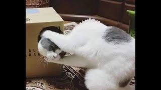😺Коты - артисты! 🐈 Подборка смешного видео с котами для хорошего настроения! 😺