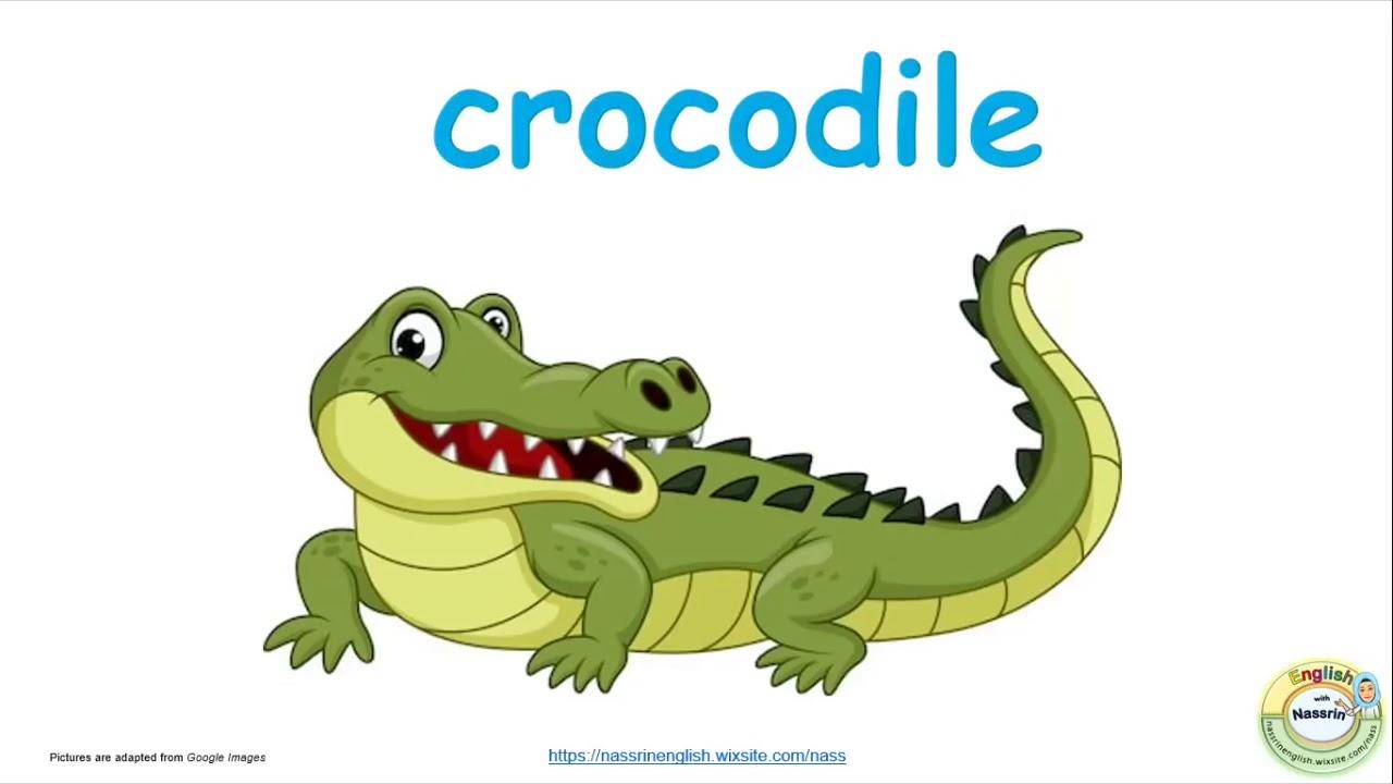 портфолио английский в картинках крокодил случаи