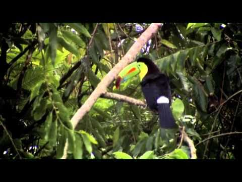 Costa Rica: Five Senses