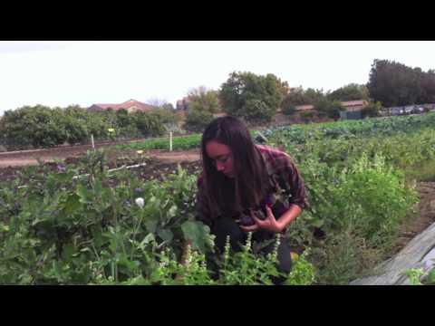 Fresh Idea Brings Campus Produce to UC Davis Pantry