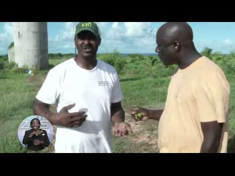 Introducing The Eleuthera Island Organic Farm