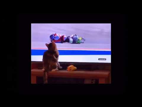 Cat touching tv usual meme
