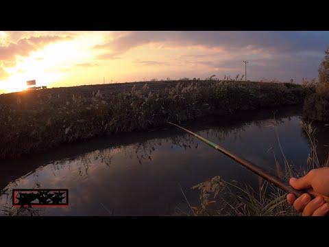 דייג בוס בנחל | מושטים שפמנון וקרפיון גדול