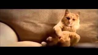 Лучшие смешные кошки и собаки, танцующие и Поющие в мире, отреагировала забавной Вселенной видео(Эй парень , это смешное видео Вселенная--- это видео показывает сверху смешные кошки и собака танцует и поет..., 2016-04-30T20:34:01.000Z)