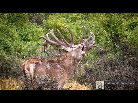 Gary Herbert's New Zealand Hunting 2017 Season
