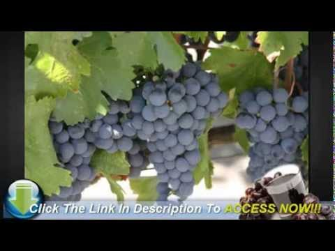 Interesting Facts About Growing Grape Vines