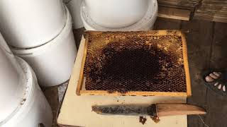 Чистим соты от засахаренного мёда