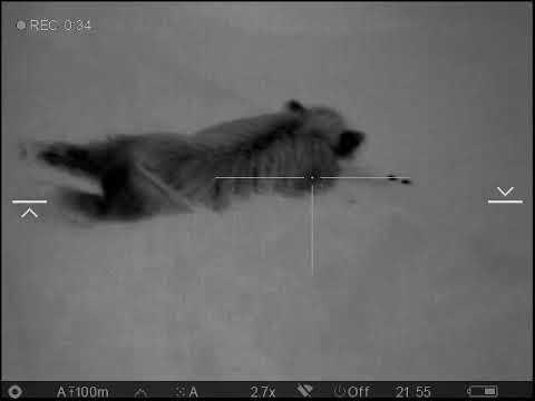 Termovize a lov divokých prasat