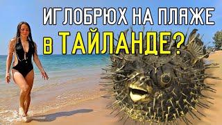 Тайланд. Опасная рыба. Второй заброшенный отель. Пляж Банг Нианг.