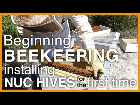 Beginning Beekeeping: Installing Two Nuc (Starter) Hives – GSB S1 E2