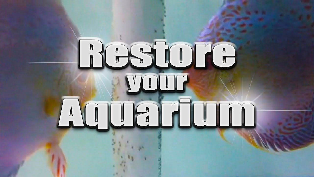 HOW TO: Restore an aquarium - remove water stains TUTORIAL - YouTube