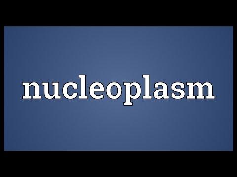Header of nucleoplasm