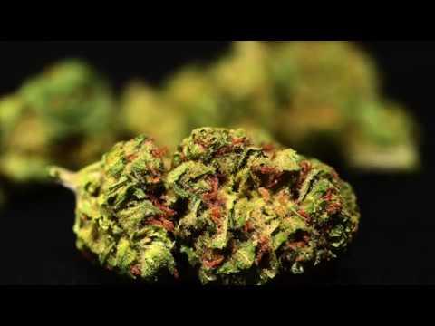 Durban Poison | Strain Theory