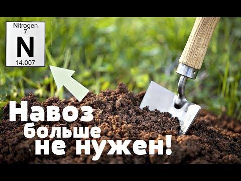 Сейте этот сидерат срочно! Почва обогатится азотом равносильно внесению 300 кг навоза!