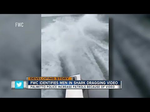 WATCH | FWC investigating after social media video of shark being dragged goes viral