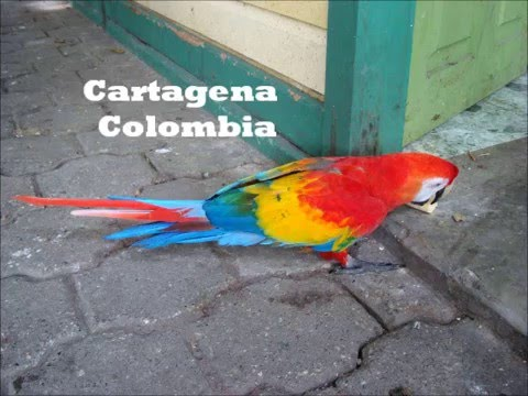 Evil Woman Cartagena Colombia
