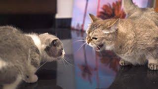 Alpha Cat Rejects New Kitten