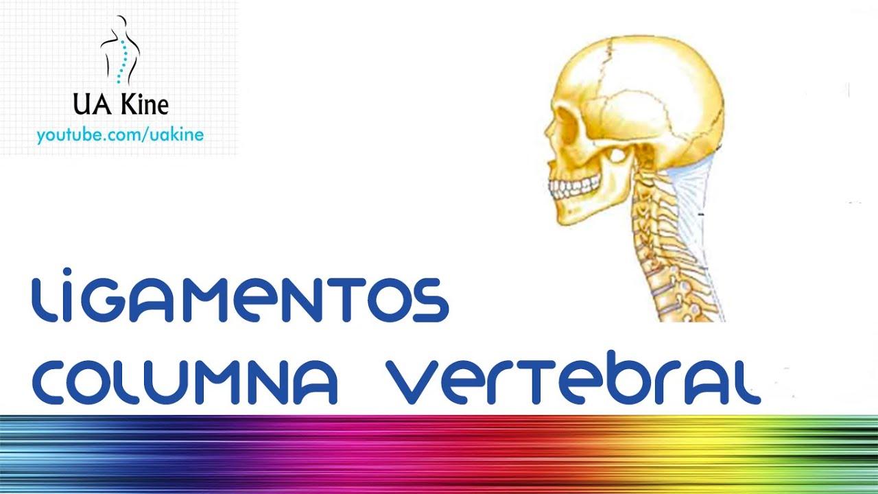 Anatomia Ligamentos Columna Vertebral - YouTube