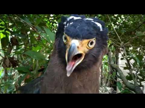 72+ Gambar Binatang Burung Garuda Gratis