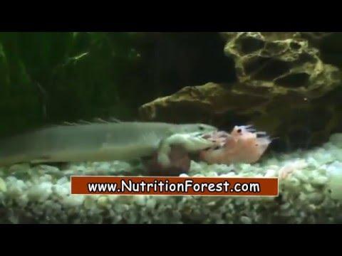 krill-shrimp-hunting-brutally