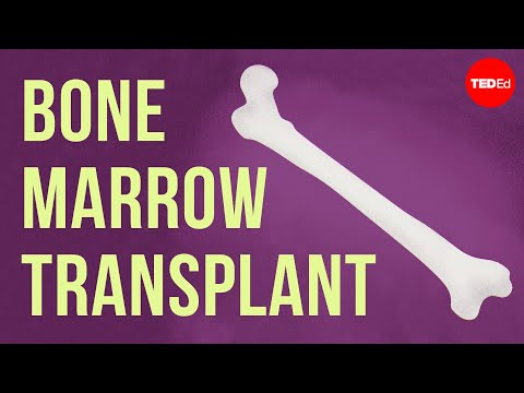 Video image: How bones make blood - Melody Smith