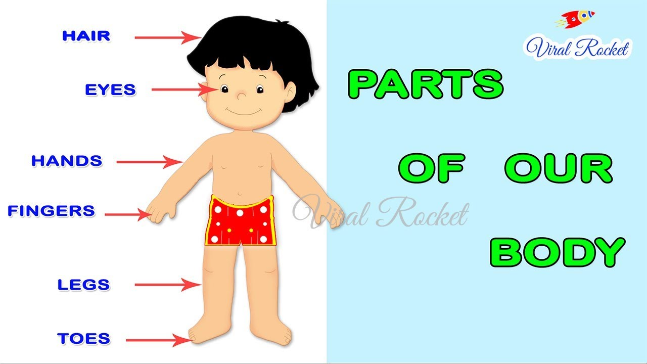 Learn Body Parts For Kids In English Body Parts Names For Children Parts Of The Body For Kids Youtube