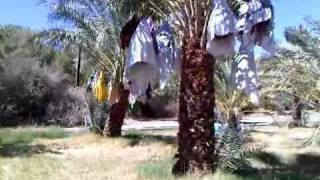 China Farm Date Ranch: The Palms
