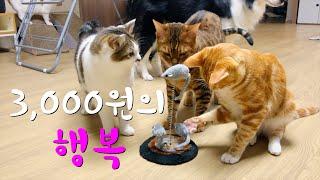 EP.22 다이소 쥐돌이 장난감으로 고양이 본능을 살려…