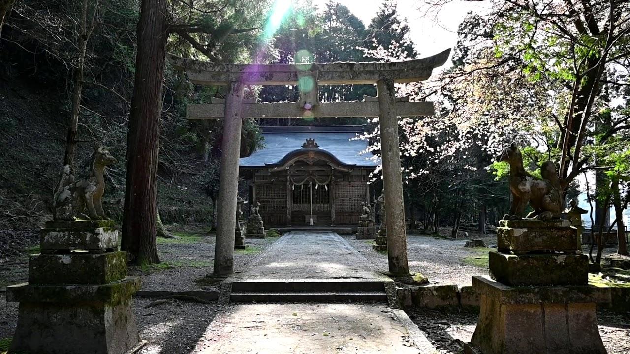 出石城跡の桜吹雪(控えめ)