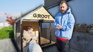 Groot-ის რეაქცია ახალ სახლსა და აქსესუარებზე