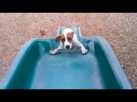 'Dogs and Puppies Playing on Slides Compilation' || CFS (2018)