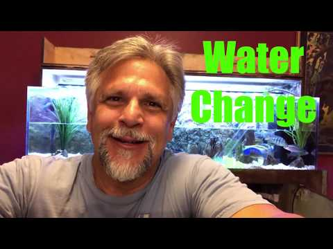 Water Change!  How Often? How Much? Why do Them at All?