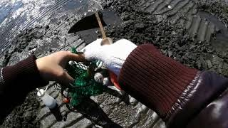過去に出したマテ貝の動画を見てか、江戸川放水路に行ってみたが、マテ...