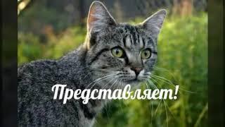 Коты-воители. Гороскоп Грозовое племя!