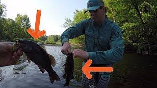 Creek Fishing for Smallmouth Bass