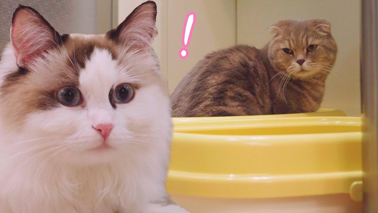 고양이-이즈가-변태가-되었어요