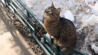 Влюблённый кот. Love the cat. Funny cat. Коты.