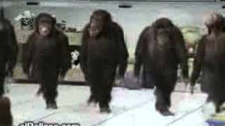 Maimute care deanseaza pe muzica populara