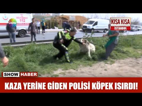 Kaza Yerine Giden Polisi Köpek ısırdı!