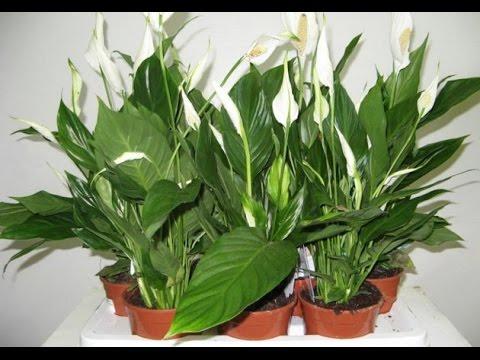 Лучшее удобрение для растений