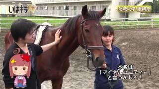 2013年 11月2日・3日に行われた、茨城大学鍬耕祭の様子です。 (※映像は3...