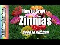 How To Grow Beautiful Zinnias - Easy To Grow - Seed To Kitchen!