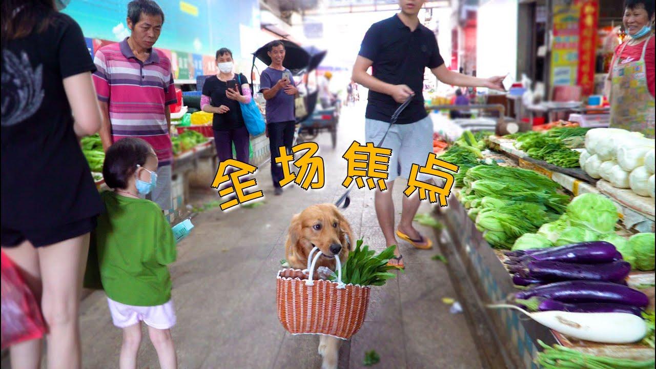 小伙子去买菜,金毛帮忙叼菜篮子,路人纷纷围观拍照!