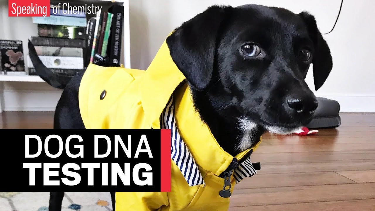 What We Can And Cant Learn From Our Pets Dna Science